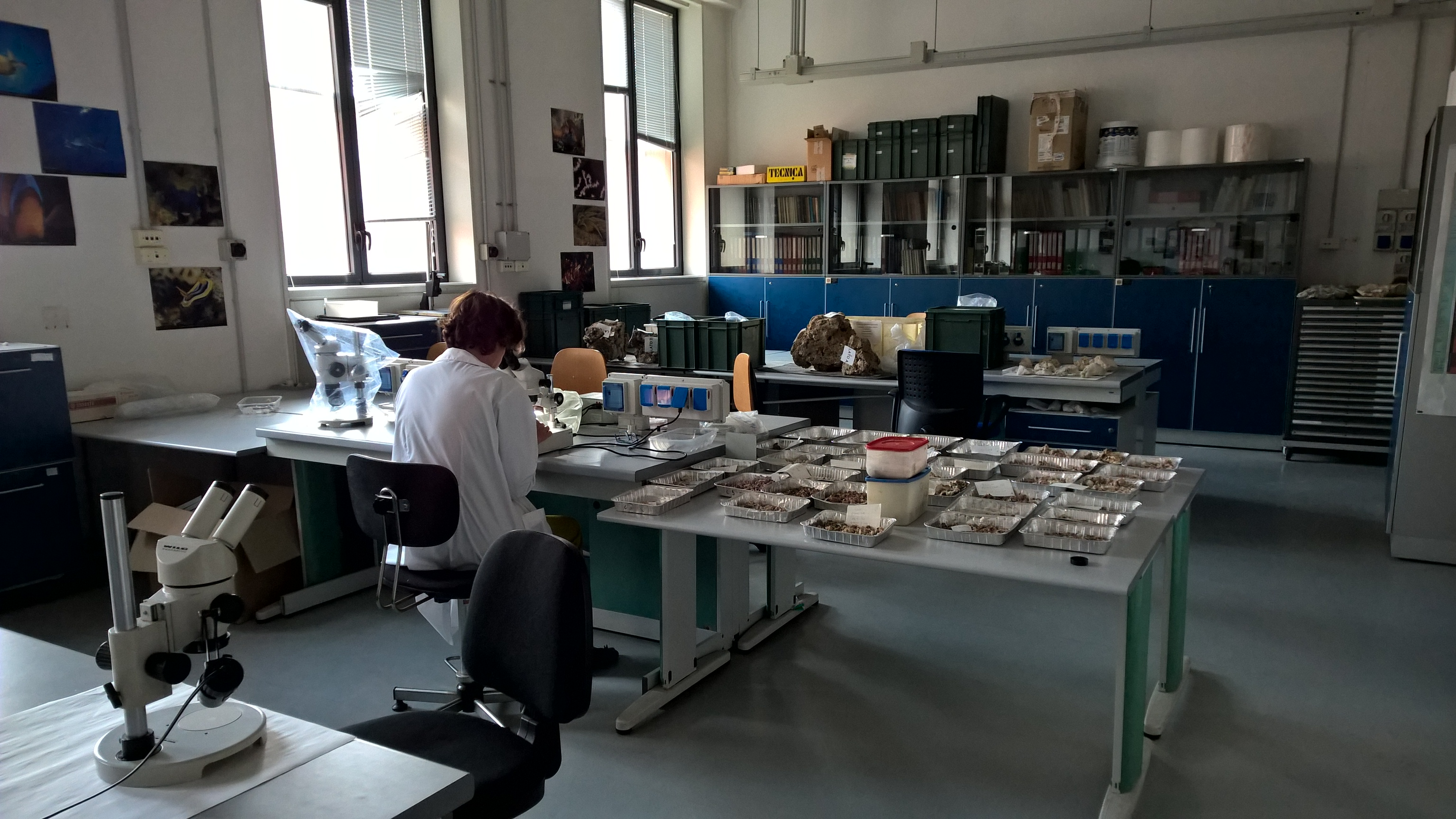 laboratorio di paleobiologia